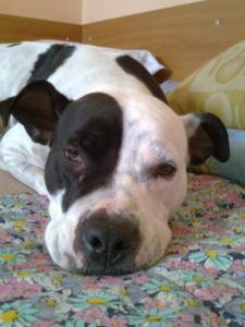 Psy a omyly - Patrí pes do bytu?