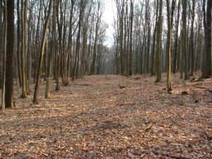 Prekážky cesty duchownej
