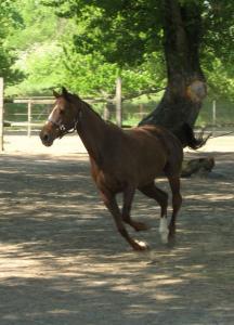 Rok dreveného Koňa