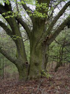 Septembrový exitus 19-tich stromov a 68 kríkov