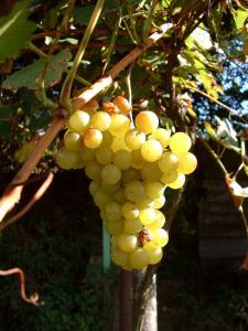 Európsky parlament sa vyjadril k vinárskej reforme