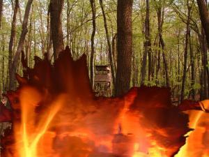 Teplotné rekordy ohrozujú les