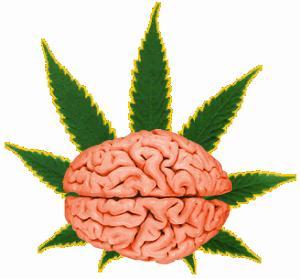 Vede konzumace konopí ke zmenšování mozku?