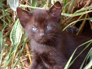 4 mačiatka bez domova