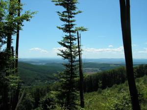 Podporte hromadnú pripomienku Ekofóra k Správe o zdravotnom stave lesov