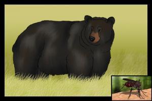 Medveď a komár