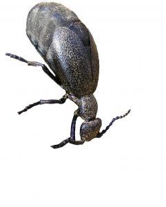 Na Kamennej opäť jedovatý hmyz